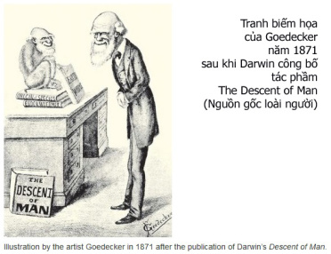 Darwin_The Descent of Man copy