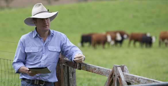 armidale-smart-farm-david-lamb