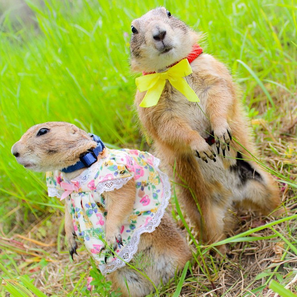 These Two Prairie Dogs Are Cute But Wait Until You See The Rest Of The Fam