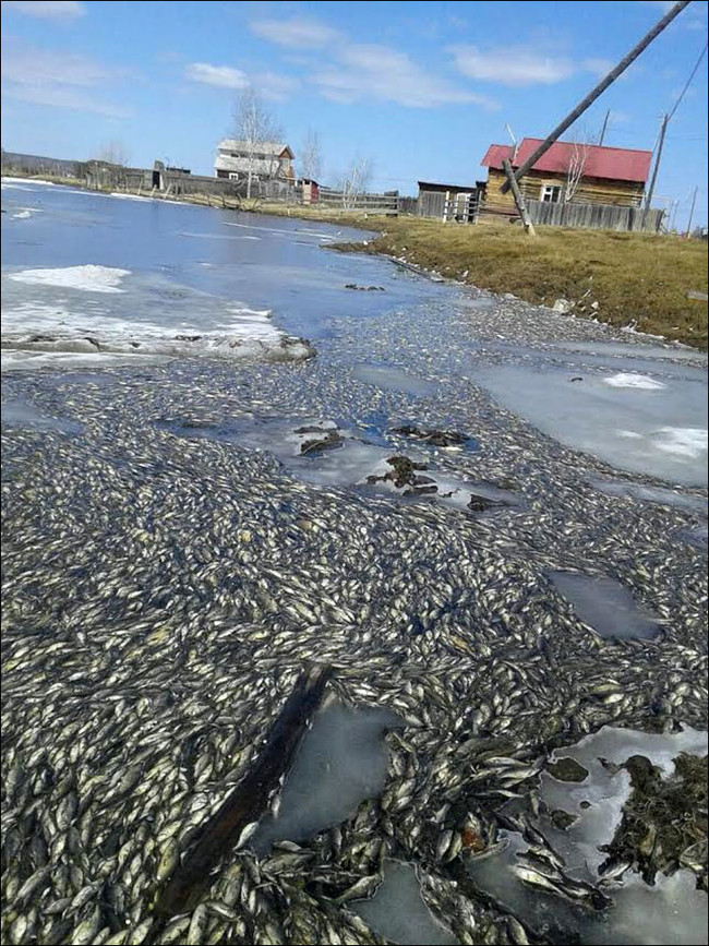 There Was A Mass Death Of Fish In One Russian Lake, And Nobody Is Sure Why