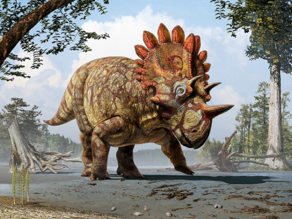 Artistic life reconstruction of the new horned dinosaur Regaliceratops peterhewsi in the palaeoenvironment of the Late Cretaceous of Alberta, Canada. Image: Royal Tyrrell Museum of Palaeontology, Drumheller, Alberta. Art by Julius T. Csotonyi.
