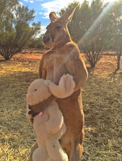 (Kangaroo Sanctuary/Facebook)