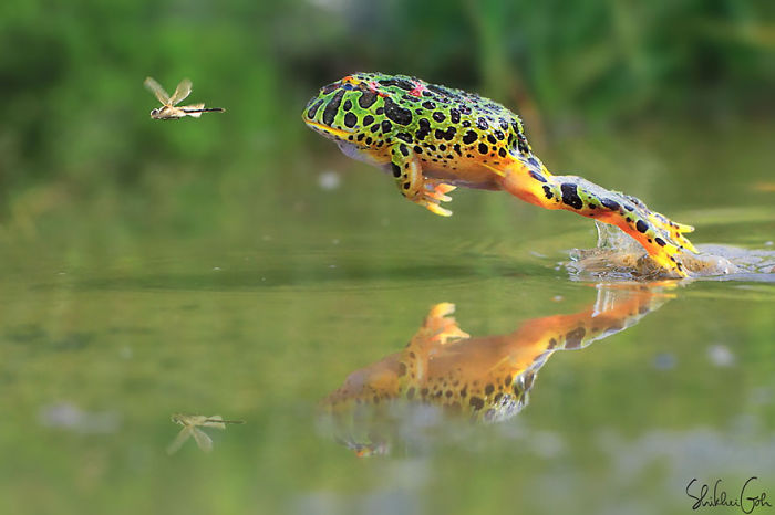 12+ Of The Coolest Frogs And Toads In The World