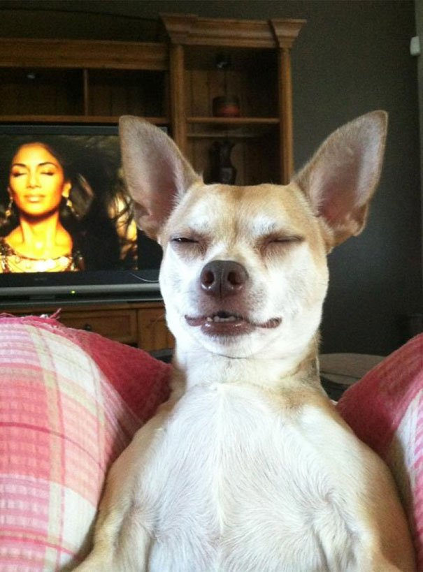 pefectly-timed-dog-photos-64