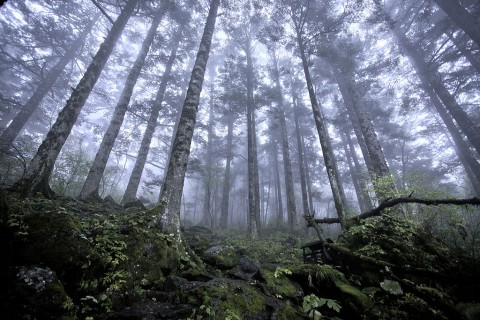 Virgin forest at approximately 8,200 feet (2,500 meters) above sea level in Shennongjia nature reserve in Hubei, China, on Oct. 3, 2012. (Evilbish/Wikimedia Commons)