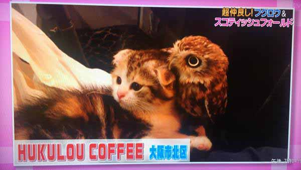 cat-owl-bird-friendship-13
