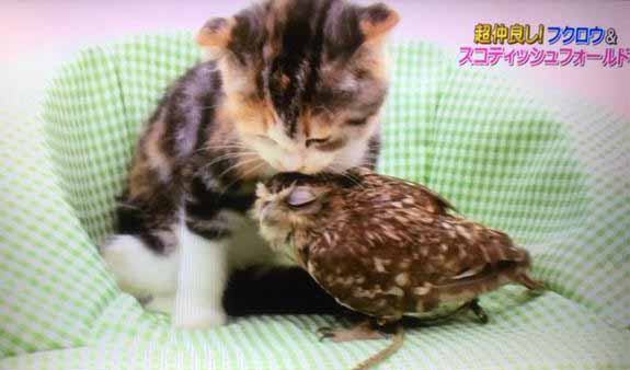 cat-owl-bird-friendship-14