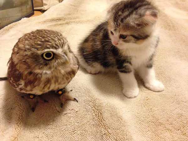 cat-owl-bird-friendship-3