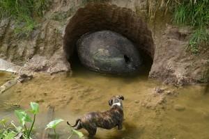 Phát hiện mai rùa tiền sử tại Argentina