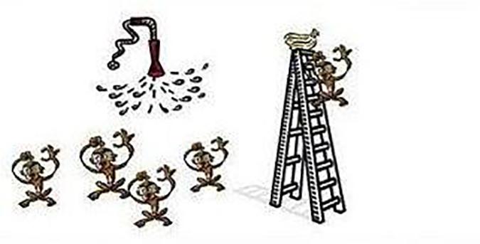 Thí nghiệm thú vị trên khỉ nhìn ra khiếm khuyết của con người (Ảnh: Internet)