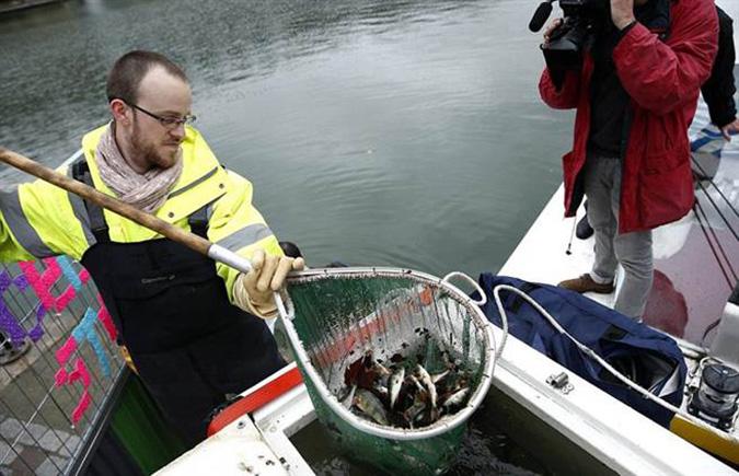 Cá bắt lên sẽ được vận chuyển đến nơi khác. (Ảnh: Online International)