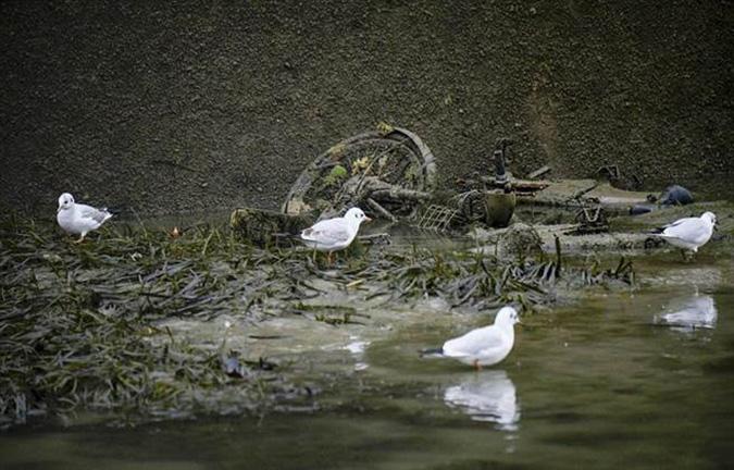 Chim cũng đang cố gắng tìm thức ăn trong những thùng rác được vớt lên. (Ảnh: Online International)