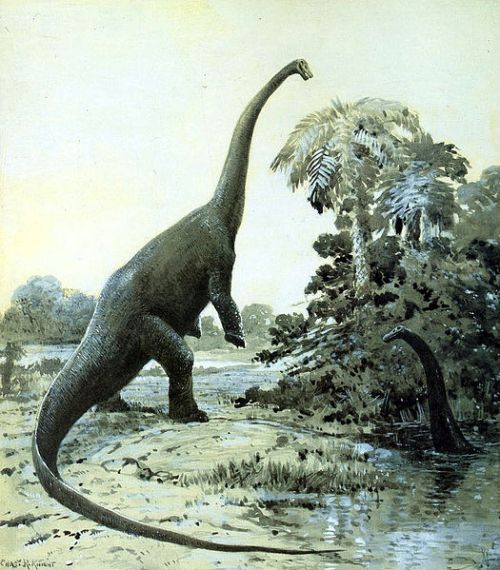 khung long an co Diplodocus