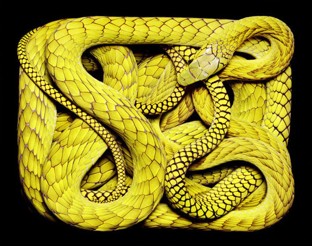 guido-mocafico_snake-photography_serpens-collection_1