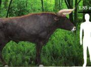 Giới khoa học sắp 'hồi sinh' thành công loài bò cổ đại khổng lồ Auroch?
