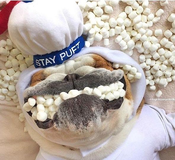 Chú chó 'nghiện'... giữ thăng bằng thức ăn trên cơ thể