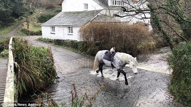 Chú mèo chễm chệ cưỡi ngựa đi dạo