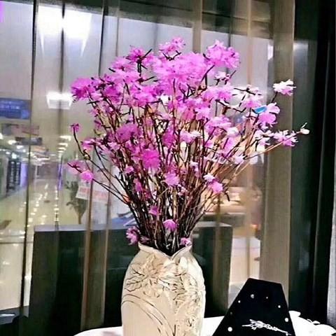 Hoa đỗ quyên khô nhập từ Trung Quốc gây 'sốt' thị trường hoa Tết 2018