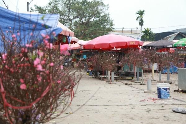 Đào Nhật Tân rủ nhau xuống chợ, giá rung rinh 50.000 đồng/cành