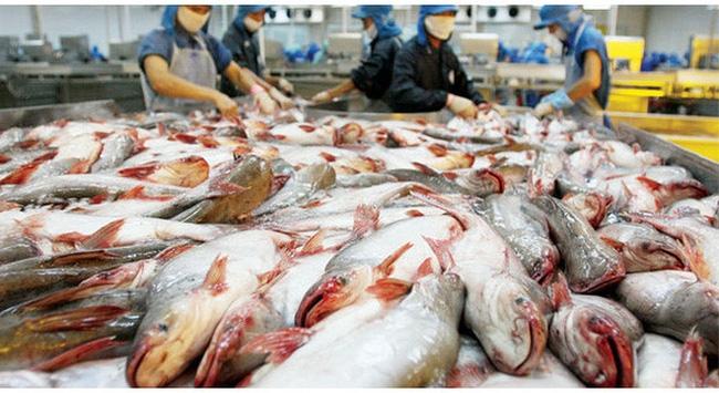 Sau kiểm toán, số lỗ của thủy sản Hùng Vương bỗng vọt lên hơn 700 tỷ đồng