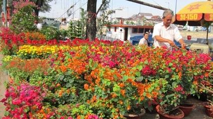 Đà Nẵng: đấu giá 164 lô chợ hoa Tết tại khu vực Quảng trường 29-3