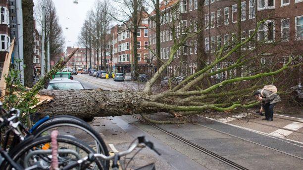 Một người đàn ông trốn thoát không cẩn thận lấy găng tay của mình sau khi chiếc xe tay ga bị trúng một cây crashing bị gió mạnh ở Amsterdam, Hà Lan, thứ Năm, ngày 18 tháng 1 năm 2018. (Ảnh: AP)