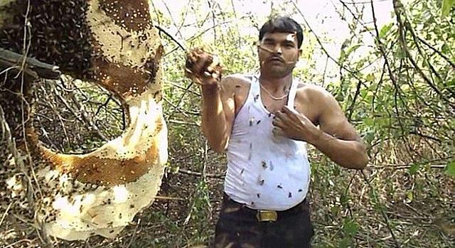 Người đàn ông Ấn Độ miễn dịch nọc độc, chơi đùa với ong như ... thú cưng