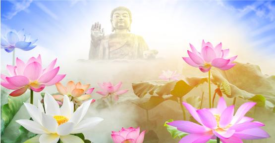 Vì sao nói Sen là loài hoa thánh khiết của nhà Phật?