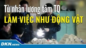 Tù nhân lương tâm Trung Quốc bị bắt 'làm việc như động vật'